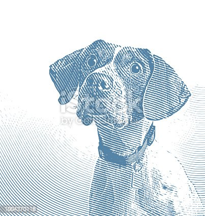 Engraving illustration of a Pointer dog in animal shelter hoping to be adopted