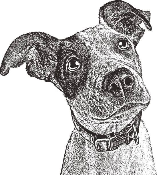 ilustrações, clipart, desenhos animados e ícones de mistura de ponteiro cachorrinho resgatado de houston após furacão harvey. - texturas de riscos