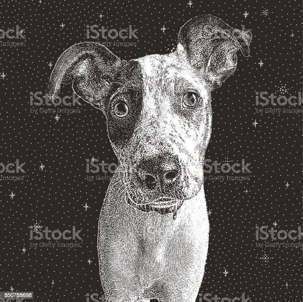 Pointer mix puppy rescued from houston after hurricane harvey vector id850758698?b=1&k=6&m=850758698&s=612x612&h=ojq  qtdy6uz1nv 2y pvjbqfhbww3blys26q kpahe=