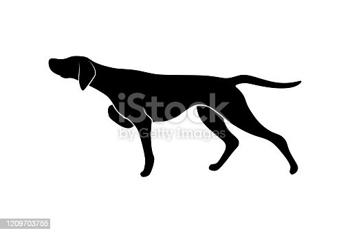 Pointing dog silhouette isolated on white background. Vector illustration