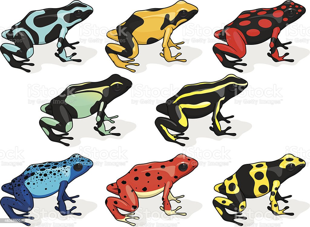 Poison Dart Frogs Compilation Stock Vector Art & More Images of ...