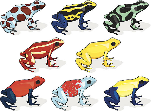 Royalty Free Poison Dart Frog Clip Art, Vector Images ...