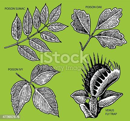 Poison Ivy, Venus Fly Trap illustrations.