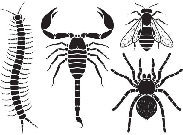 poisonous insects set. - tarantula stock illustrations