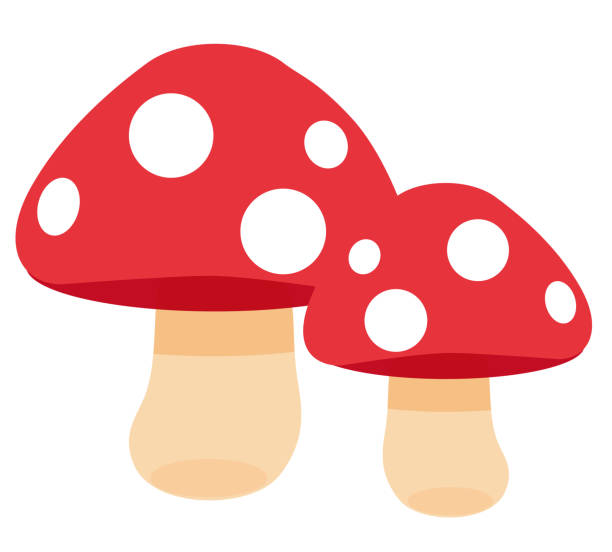 유독 버섯 - 버섯 stock illustrations