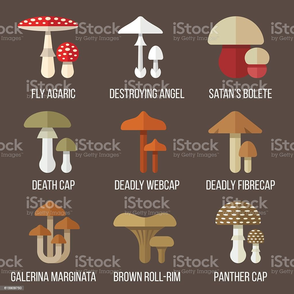 Poisonous mushrooms vector art illustration