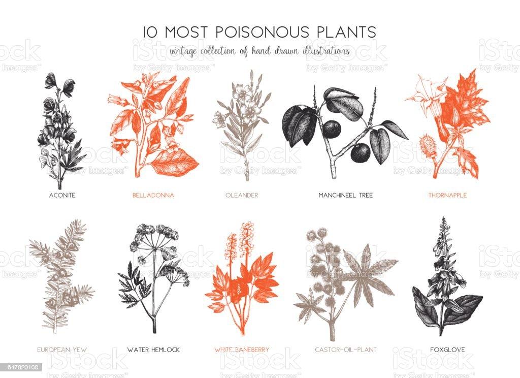 poisonous plant design