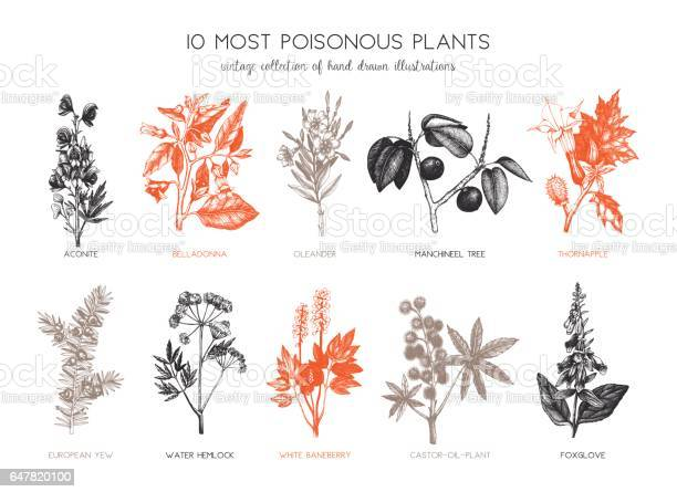 Vector collection of most poisonous plants - hand drawn botanical illustrations.