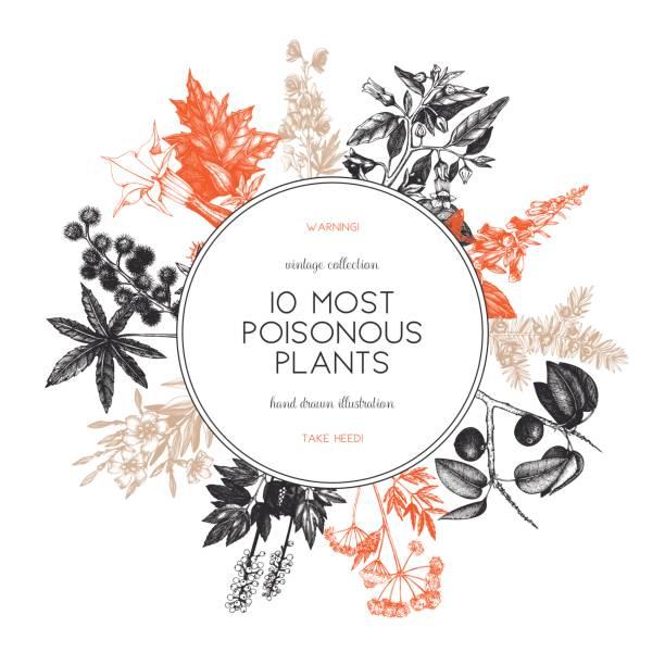 giftige pflanze-design - eisenhut stock-grafiken, -clipart, -cartoons und -symbole
