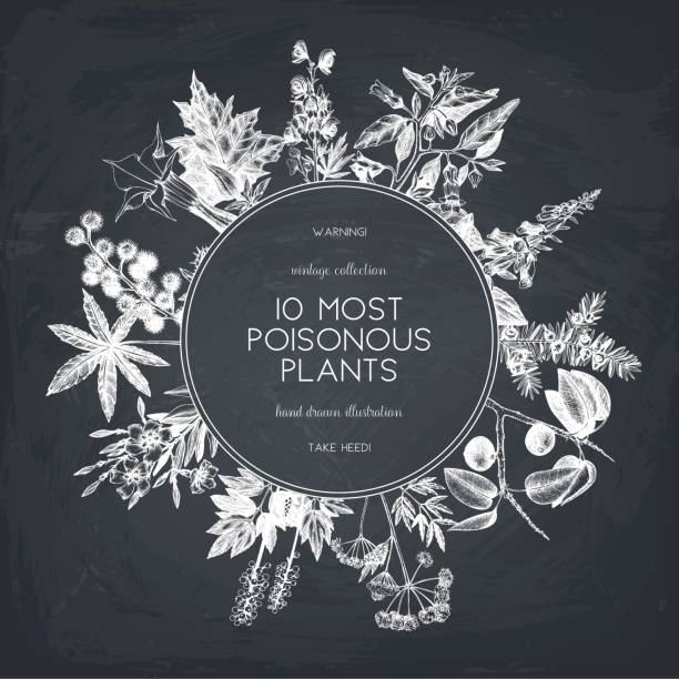 poisonous plant design - eisenhut stock-grafiken, -clipart, -cartoons und -symbole