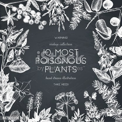 Vector frame design with hand drawn poisonous plants illustration on chalkboard