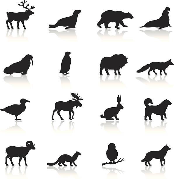 ilustraciones, imágenes clip art, dibujos animados e iconos de stock de conjunto de iconos de animales polar - reno mamífero