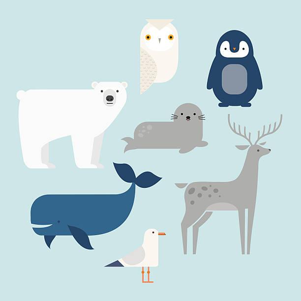 Polar animals Vector set Arctic and Antarctic animals. Penguin, polar bear, seal, reindeer, whale, snowy owl, albatross. Set of polar animals. Flat style character. Vector illustration arctic stock illustrations