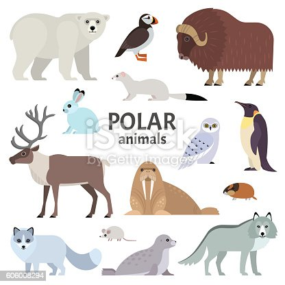 Vector collection of polar animals and birds, including polar bear, musk ox, seal, walrus, wolf, polar fox, reindeer, penguin and ermine, isolated on white.