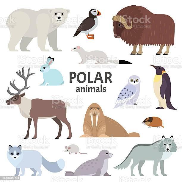 Polar animals vector id606008294?b=1&k=6&m=606008294&s=612x612&h= n9 bszwwujxb6yu  fcbksm rc23rlu bfcscvf6aw=