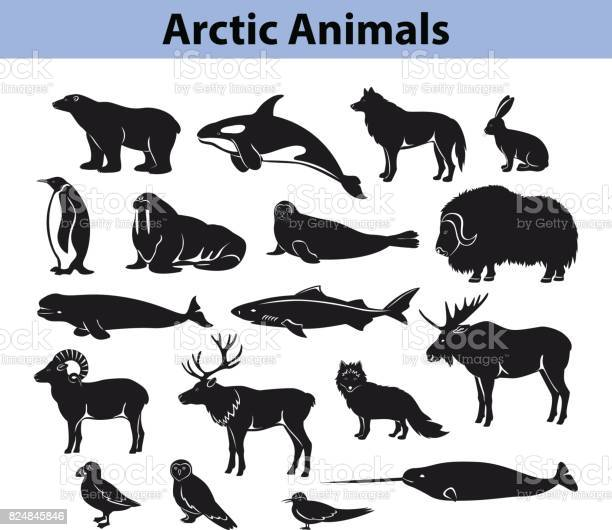Polar arctic animals silhouettes collection vector id824845846?b=1&k=6&m=824845846&s=612x612&h=quzltewquh0r7cpfql3iyjym  u7a3nxo4qdts8ex8s=