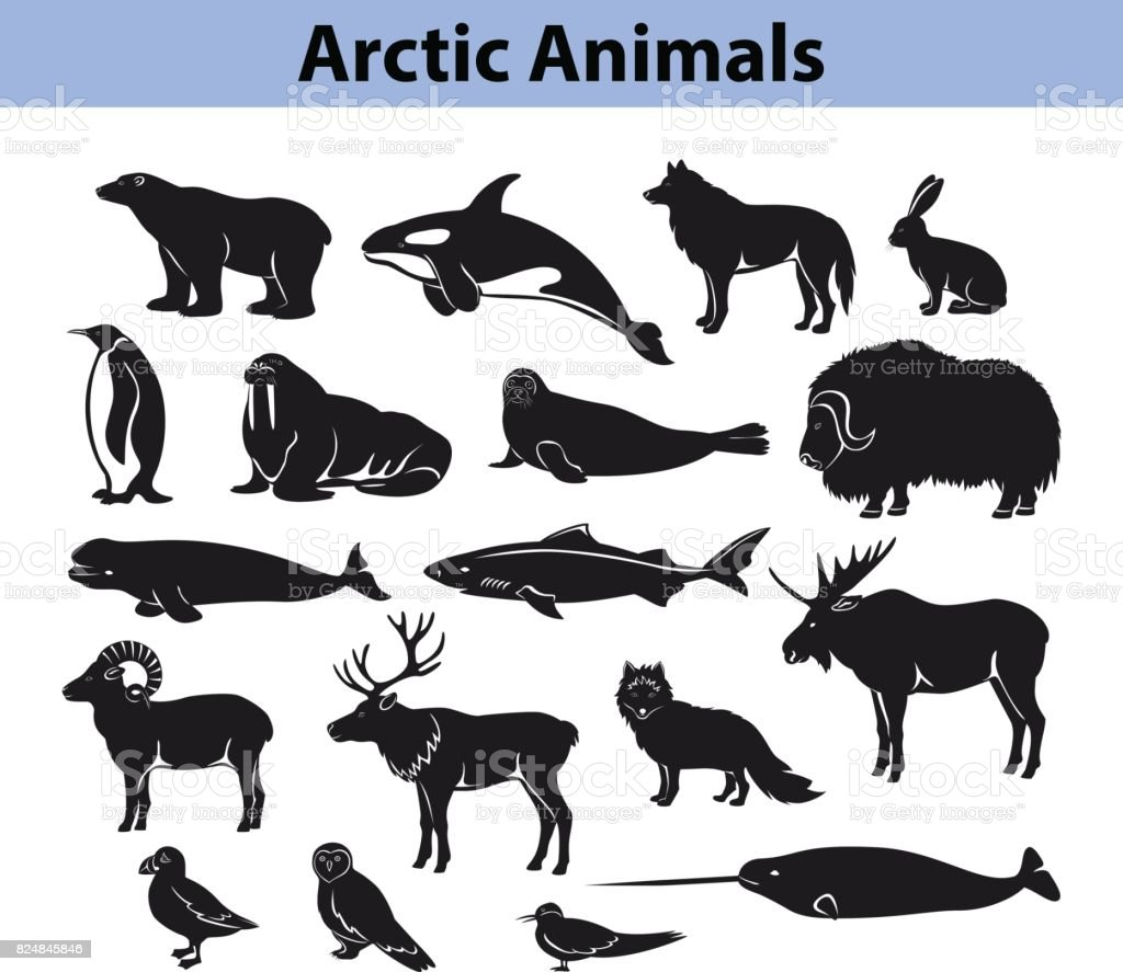 Polar arctic animals silhouettes collection vector art illustration