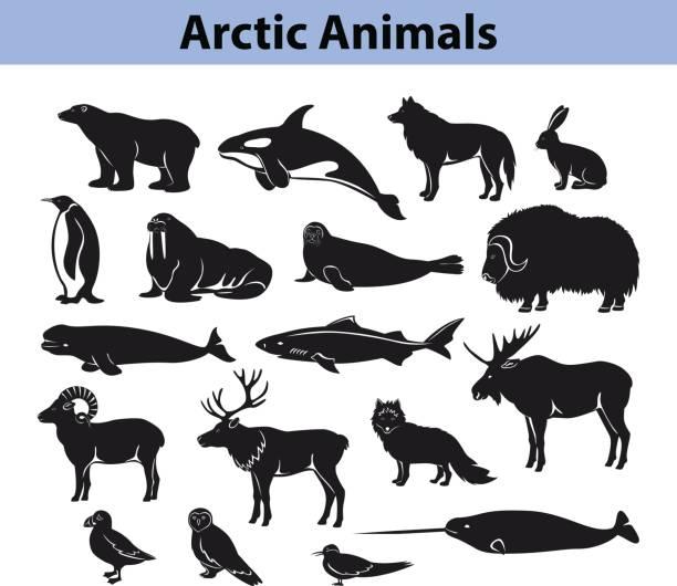 Polar arctic animals silhouettes collection Polar arctic animals collection beluga whale stock illustrations