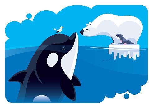 polar bear communicating with orca