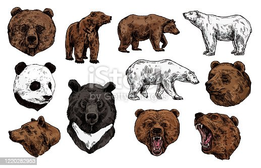 istock Polar, brown bear, grizzly and panda sketch 1220282953