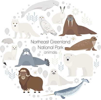 Polar Seal Animals Set Bear Musk Ox Arctic Fox Ermine Stock Illustration - Download Image Now