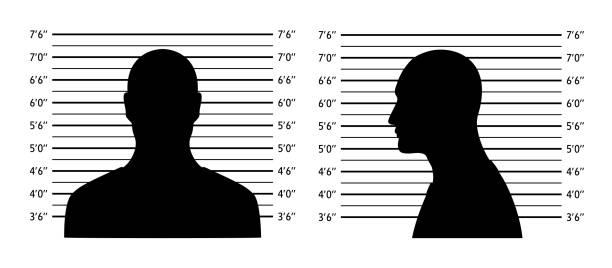 Police lineup. Mugshot background with silhouette men Police lineup. Mugshot background with silhouette men. Black silhouette on white background. Front and profile of  man Isolation. Vector illustration mug shot stock illustrations