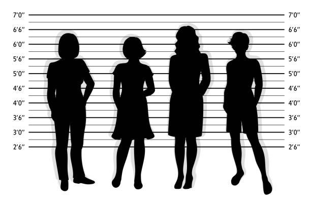 Police lineup. Mugshot background with silhouette of different women Police lineup. Mugshot background with silhouette of different women.  Black silhouette of four women on white background. Isolation. Vector illustration mug shot stock illustrations