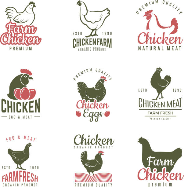 Pollo labels. Fast food chicken logotypes badges farm meat of bird vector template Pollo labels. Fast food chicken logotypes badges farm meat of bird vector template. Illustration of bird farm, chicken label food poultry stock illustrations