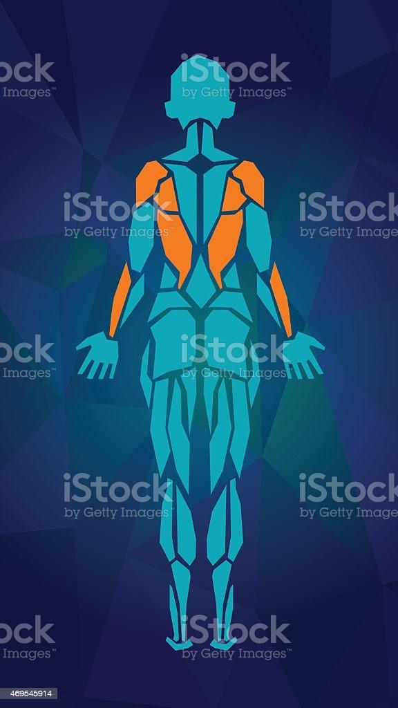 Ilustración de Hembra Polygonal Anatomía Del Sistema Muscular Back ...