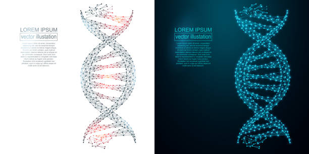 polygonal dna abstract image. low poly wireframe - dna stock illustrations, clip art, cartoons, & icons