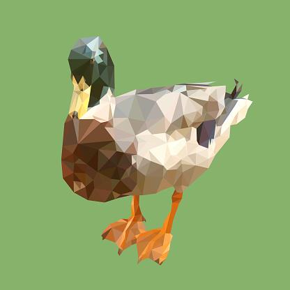 polygonal mallard, geometric polygon wild duck, isolated vector animal illustration