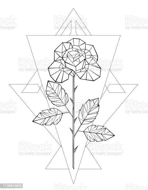 Polygonal rose vector id1128843820?b=1&k=6&m=1128843820&s=612x612&h=bnqqcnnygolvynmsuotpzgk2fnjwi rud3rbqnt8lh0=