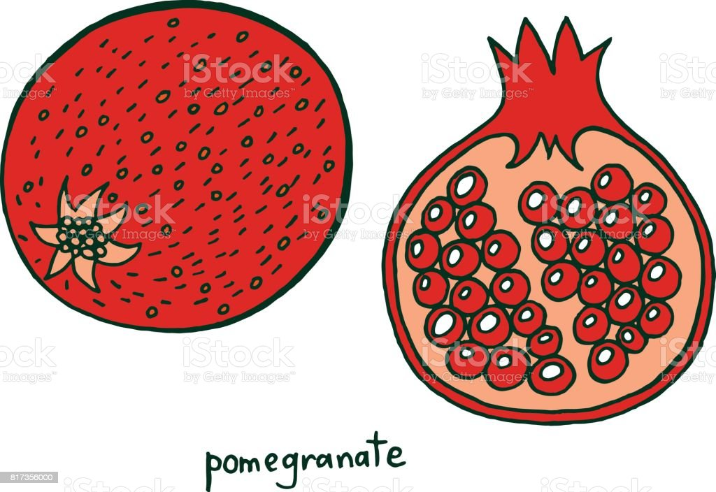 Pomegranate Fruit Coloring Page Graphic Vector Colorful Doodle Art