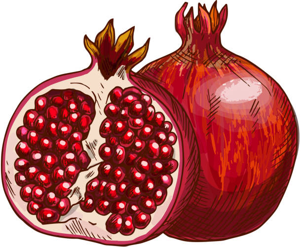 Royalty Free Pomegranate Clip Art, Vector Images ...
