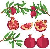 Pomegranate. Set of pomegranates.