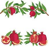 Pomegranate. Set of pomegranates. Vector illustration on a transparent background.