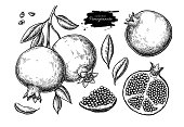 Pomegranate vector drawing set. Hand drawn tropical fruit illustration. Engraved summer fruit. Whole and sliced objects with leaves and seeds. Botanical vintage sketch for label juice packaging design