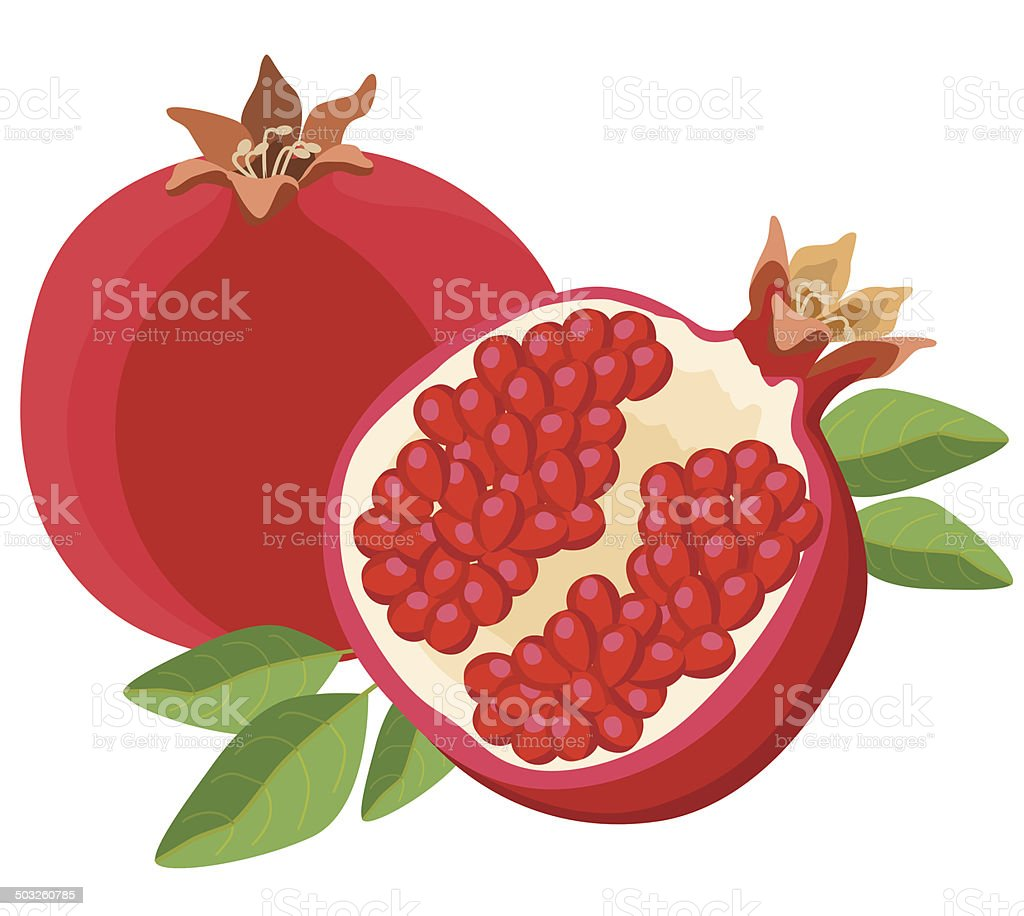royalty free pomegranate clip art vector images illustrations rh istockphoto com pomegranate clipart outline pomegranate clipart black and white