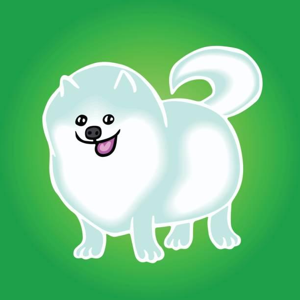 pommersche spitz netter hund. vektor-illustration. - hundehaarbögen stock-grafiken, -clipart, -cartoons und -symbole