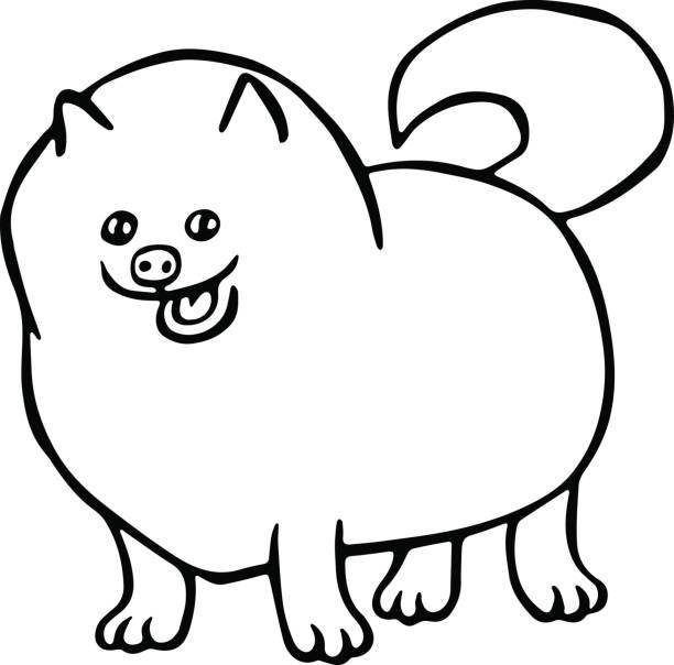 pommersche spitz hund. vektor-illustration isoliert. - hundehaarbögen stock-grafiken, -clipart, -cartoons und -symbole