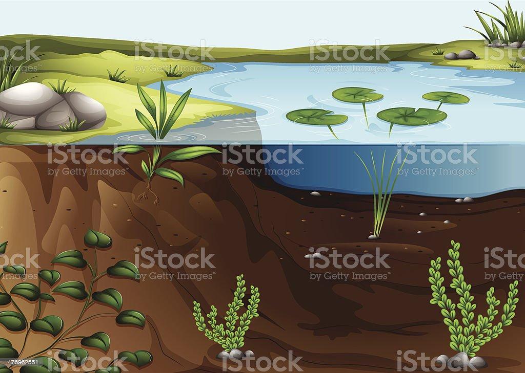 pond ecosystem vector art illustration