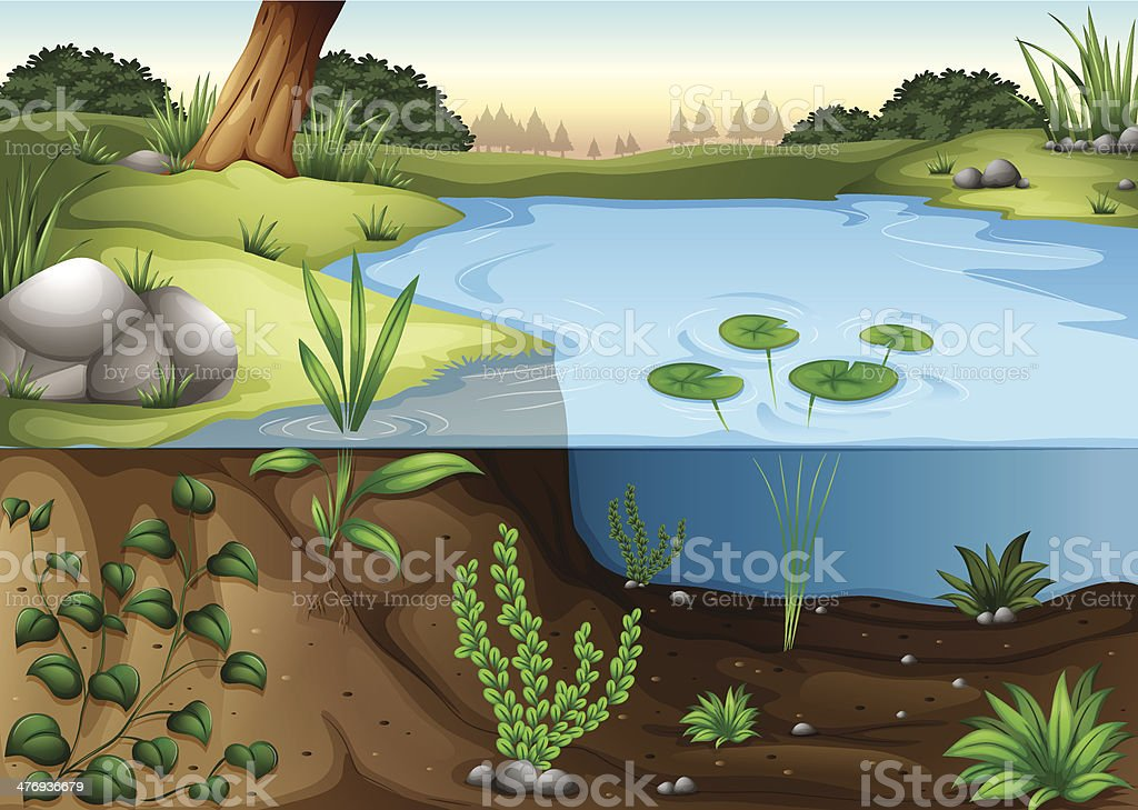 pond ecosytem vector art illustration