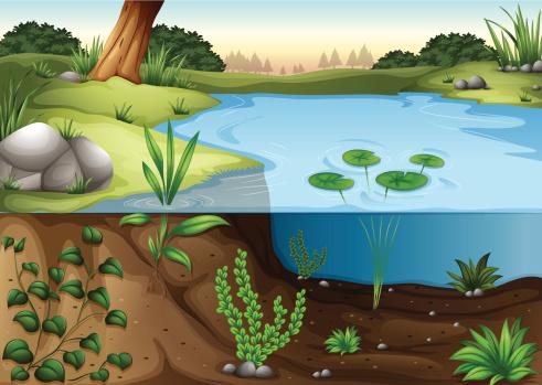 Pond stock illustrations