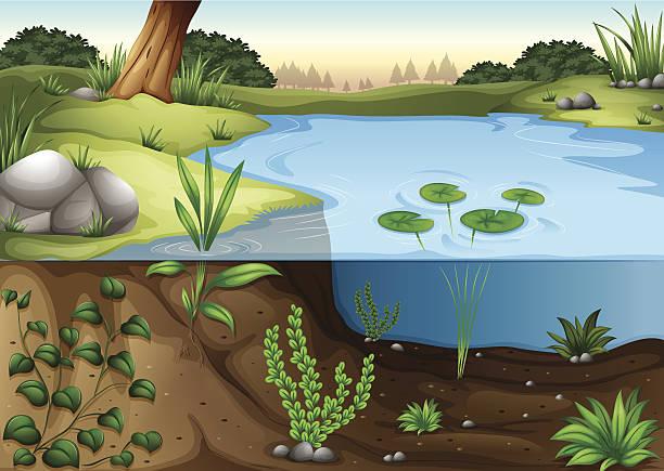 연못 ecosytem - 강둑 stock illustrations