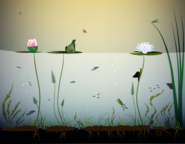 pond life, under the water, river's animal, shadows, black and white, - pond stock illustrations