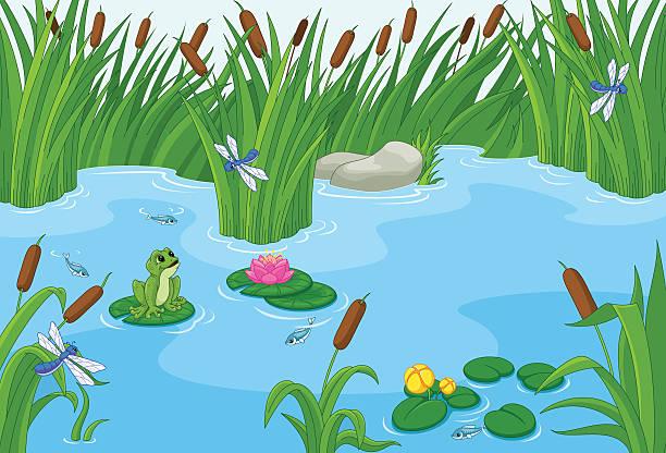 pond  - seerosenteich stock-grafiken, -clipart, -cartoons und -symbole