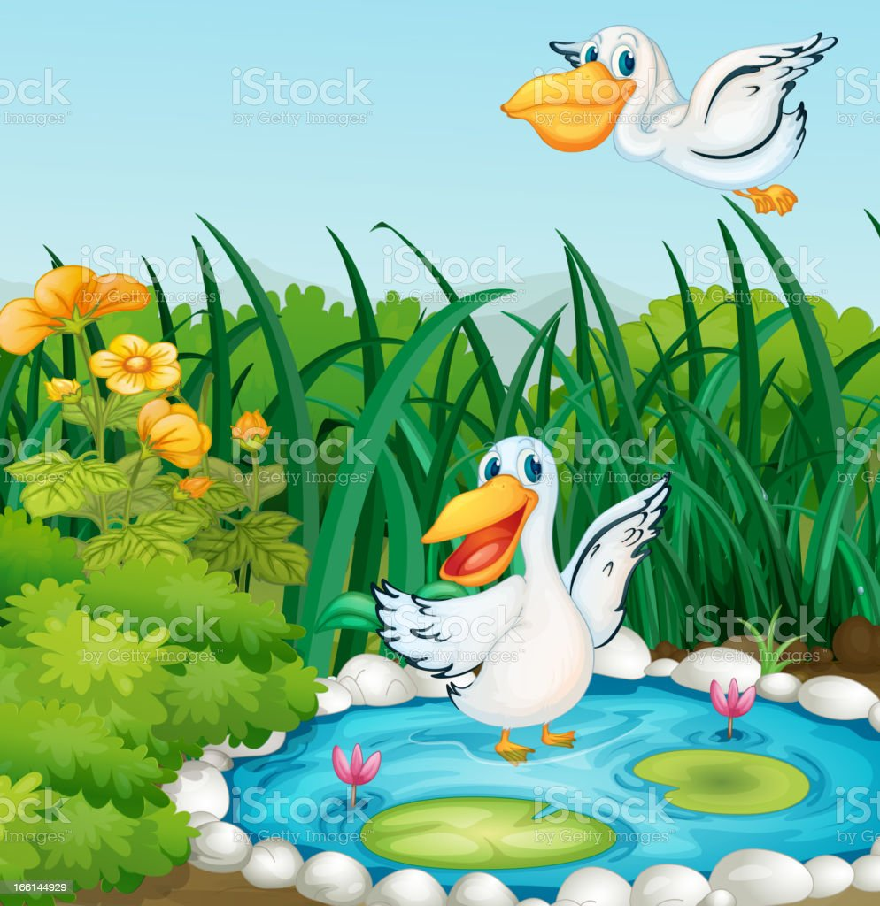 Pond with ducks royalty-free pond with ducks stock vector art & more images of animal