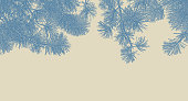 Pen and ink illustration of Ponderosa Pine branches background