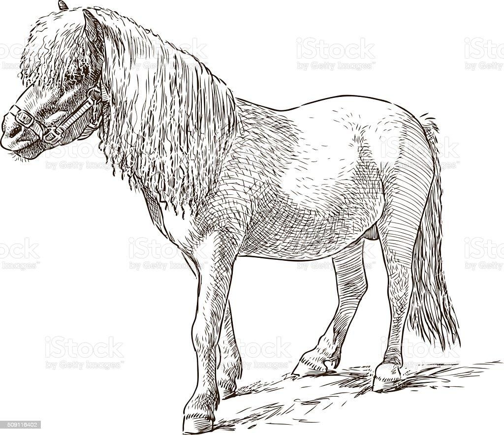 pony sketch vector art illustration
