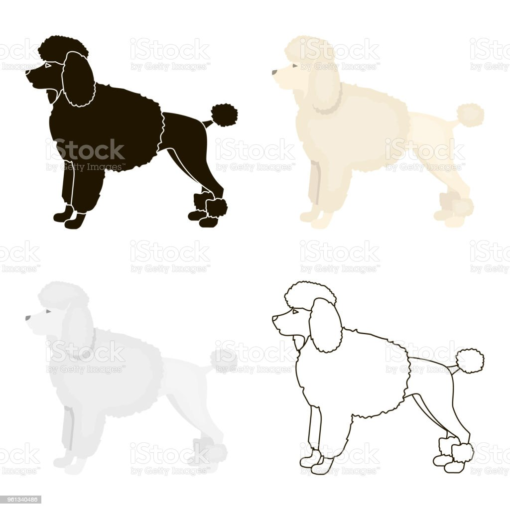 Poodle vector icon in cartoon style for web vector art illustration